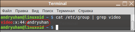 terminal-video-group